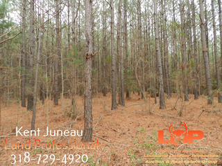 120 Acres FOR SALE in Winn Parish