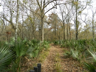 120+/- acres In Northern St. Landry Parish For Sale
