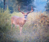 East Carroll Parish Hunting Land For Sale